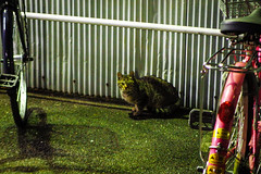 Today's Cat@2016-01-22 (masatsu) Tags: cat pentax cc100 catspotting mx1 thebiggestgroupwithonlycats