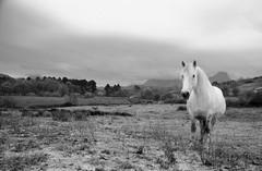 DSC_0161_editado-1 (adrizufe) Tags: bw horse white nature landscape ilovenature caballo blackwhite nikon cloudy ngc bn nublado basquecountry blanconegro anboto durangaldea nikonstunninggallery aplusphoto d7000 adrizufe adrianzubia