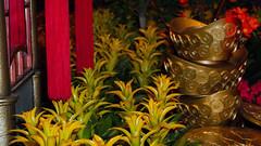 Bellagio_Chinese New Year 1-4 (Swallia23) Tags: las vegas flowers money hotel peach chinesenewyear casio nv bellagio yearofthemonkey 2016 conservatorybotanicalgarden