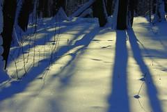 1-IMGP3679 (PahaKoz) Tags: park trees winter shadow snow tree nature forest snowflakes shadows parkland lindentree