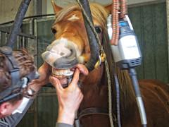 P1290032 (gill4kleuren - 11 ml views) Tags: horse sarah bezoek dentist haflinger tandarts anisia