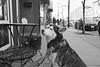 Handsome Husky (Georgie_grrl) Tags: blackandwhite dog toronto ontario husky handsome canine pentaxk1000 poochie thisismygoodside rikenon12828mm ilfordasa400