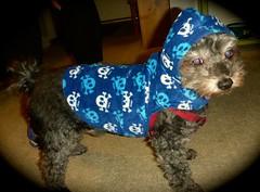 In Memorial: see video link (TrackHead Studios) Tags: pet pets dogs memorial rip bewareofdog adamhall trackhead trackheadstudios trackheadxxx