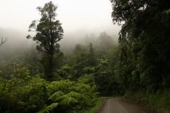 Coroglen Road, NZ (jmonhof) Tags: newzealand rain weather rainforest rainy wald regen wetter coromandel neuseeland gravelroad regenwald
