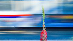 flk7 (henryderhovanessian) Tags: street urban art d200