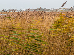 Yarmouth, Isle of Wight through the reeds... (Charles Smallman) Tags: reeds landscape isleofwight solent yarmouth riveryar nikond800 charlessmallman