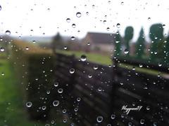 je viens juste de faire les carreaux (Phrygane57) Tags: macro pluie carreaux traitement gouttelettes