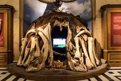 Mammutknochen-Haus (Anita Pravits) Tags: vienna wien house museum haus exhibition mammoth bones nhm ausstellung naturhistorischesmuseum knochen mammut mammutknochen mammuthaus