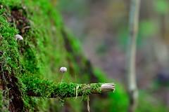 DSC_0116_00003 (AndreasHvidsten) Tags: summer plant colour green mushroom forest moss