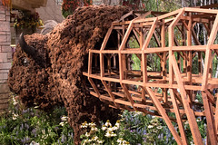 American Bison / Prairie House (The Flying Inn) Tags: flowers sculpture art philadelphia pennsylvania castiron conventioncenter redoak philadelphiaflowershow 2016 americanbison emilywhite rawwool