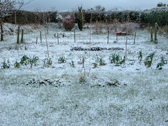 snow_in_our_garden_7882-3 (allybeag) Tags: trees winter snow weather sunrise garden veg cobbles bushes criffel slouds