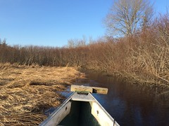 YV-22032016-simple-JR-6 (Jonathan Riverwalker) Tags: stream brook baboon stillwater canoeing february bog macdonald yrp paddler alders yearround