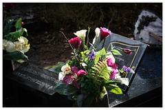 s'Hertogenbosch Begraafplaats Orthen (zsirra) Tags: friedhof cemetery graveyard angel den bosch begraafplaats cimitero grabsteine cmentarz gräber orthen