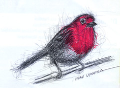 pajaro a lapicero (ivanutrera) Tags: bird animal pen sketch drawing ave pajaro draw dibujo pjaro lapicero boligrafo dibujoalapicero dibujoenboligrafo