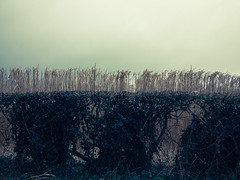 P32700912 (wigeon22) Tags: nature landscape olympus epl3