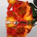 Red/orange tulip with serrated edge and reflection