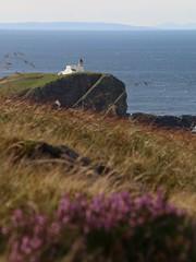 Stoer Lighthouse, Assynt (milnefaefife) Tags: sea plants lighthouse grass landscape coast scotland highlands heather cliffs hills moor sutherland moorland stoer assynt northwesthighlands pointofstoer stoerhead stoerlighthouse
