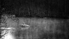 A gull on a rock in the fog. (bobban25) Tags: blackandwhite bw tree water monochrome stone canon sweden outdoor gull  sverige sten scandinavia vatten trd linkping n stergtland ms 70d vesterby artinbw canoneos70d canon70d canonefs18135