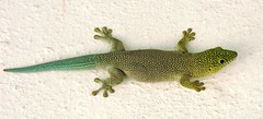 Standing′s Day Gecko At Stop At