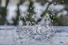 Water Crown-7 (shutterdoula) Tags: macro crown splash waterdropmacro