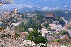 , (Vincent_Ting) Tags: sky japan cherry landscape temple pagoda spring sunny bluesky cherryblossoms nara kansai uji buddhisttemple cherrytree     japantemple   touristdestination           vincentting