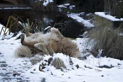 Spike-6469 (paul.roumen) Tags: winter sneeuw spike thuis