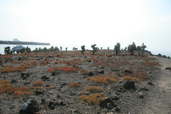 IMG_7636 (chupalo) Tags: cacti lavarocks islasplaza