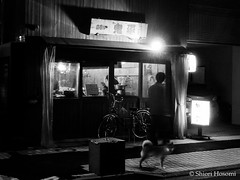 (Shiori Hosomi) Tags: dogs monochrome japan night tokyo march nocturnal nightshot  mammalia  2016 canis     noctuary  noctivagant 23