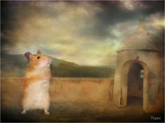 Popea en Margarita... (musymas) Tags: pet texture hamster popea musymas