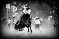 Surgindo do p (Eduardo Amorim) Tags: brazil horses horse southamerica brasil criollo caballo cheval caballos cavalos pferde cavalli cavallo cavalo gauchos pferd riograndedosul pampa hest hevonen campanha brsil chevaux gaucho  amricadosul fronteira hst gacho  amriquedusud  gachos  sudamrica suramrica amricadelsur  sdamerika crioulo caballoscriollos criollos jineteada   americadelsud gineteada dompedrito  crioulos cavalocrioulo americameridionale caballocriollo eduardoamorim cavaloscrioulos
