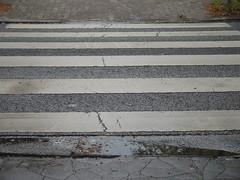 Auch Zebrastreifen (dorotheazinsser) Tags: asphalt verkehr regen streifen strase 52wochenfotochallenge