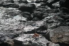 IMG_7623 (chupalo) Tags: landiguana lavarocks islasplaza