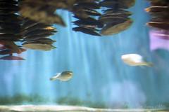 20160227-12 (GenJapan1986) Tags: film japan aquarium  miyagi  2016     nikonnewfm2 fujifilmfujicolorsuperiaxtra400