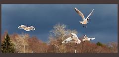 Gaviotas (galinaderusia) Tags: trees sky seagulls outdoors spring gaviotas