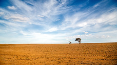 Two trees (RWYoung Images) Tags: tree rural canon farm dry australia victoria dirt drought paddock anakie quantumentanglement rwyoung 5d3