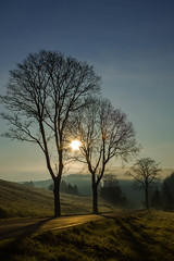 Good Morning Wolfsberg im Harz! (inesdobras) Tags: blue trees sunrise canon bume sonnenaufgang harz wolfsberg