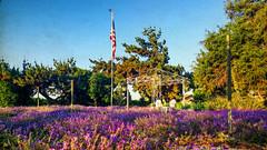 SEATED BENEATH THE AMERICAN SKY (akahawkeyefan) Tags: flowers trees dave us chairs flag canopy meyer candelabra kingsburg