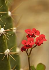 Spring 2016 - 833 LBG (Lostash) Tags: life flowers plants nature spring flora seasons leicesterbotanicalgardens