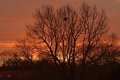 Zonsopkomst (Omroep Zeeland) Tags: licht boom relief lucht geel rood takken kleuren enz zonsopkomst