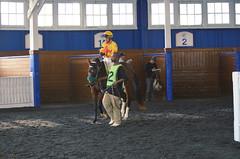 2015-12-13 (61) r5 Jevian Toledo on #12 Kit De Luca (JLeeFleenor) Tags: horses caballo cheval photography md photos uma maryland cal jockey jinete cavallo cavalo pferd equestrian kuda alogo equine hest thoroughbreds soos hevonen cuddy paard cavall kon koin laurelpark  jokey fantino hst ceffyl  jquei  ko faras hestur  perd ngi  konj    capall beygir yarraman dokej rennreiter  pfeerd marylandhorseracing marylandracing   okej kilparatsastaja jocheu