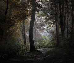 ~ into the forest ~ (Lisa Holder NC) Tags: trees light mist nature silhouette misty fog forest landscape woods outdoor path scenic backlit