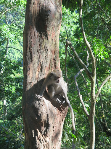 388. Pusuk Monkey Forest near Senaru