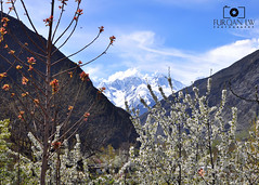 Nagar valley, upper Hunza, Pakistan (Furqan LW) Tags: pakistan nature valley northern nagar gilgit furqan furqanlw