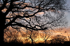 Cherry Orchard Sunrise (music_man800) Tags: life park uk morning blue trees winter light sky orange sun colour tree nature field silhouette clouds sunrise canon cherry outdoors dawn countryside early woods december colours arty natural artistic walk united country gimp kingdom sunny orchard essex southend daybreak rayleigh gimp2 700d
