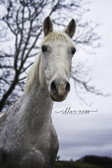 Nichole and Dillon (chloeness96) Tags: horses horse fun scotland pony together bond ponies equine ayrshire