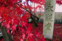 Eikan-do temple  Kyoto (Julien Mailler) Tags: world street travel pink leaves japan stone temple japanese julien maple kyoto momiji kansai japon rable budhist japonais nationalgeographic budhism eikando reflectionsoflife lovelyphotos jules1405 unseenasia earthasia mailler