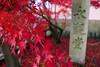 Eikan-do temple  Kyoto (Jules en Asie) Tags: world street travel pink leaves japan stone temple japanese julien maple kyoto momiji kansai japon érable budhist japonais nationalgeographic budhism eikando reflectionsoflife lovelyphotos jules1405 unseenasia earthasia mailler