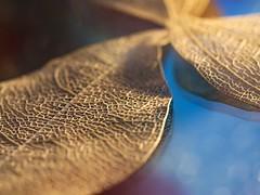 Leaf Skeletons (Quitschiehund) Tags: bokeh makro farbe omd abstrakt unschrfe blattskelett