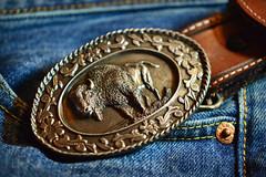 Bison Buckle (MTSOfan) Tags: clothing bison beltbuckle