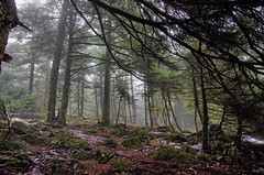 Forest mist (Ophiur) Tags: trees mist snow cold wet fog forest woods soil shade parnitha